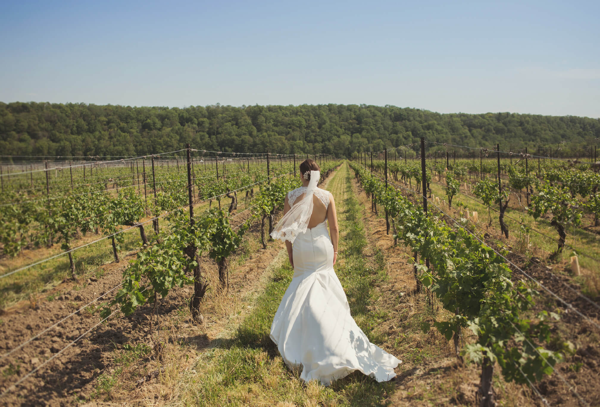 bride in vineyard ontario