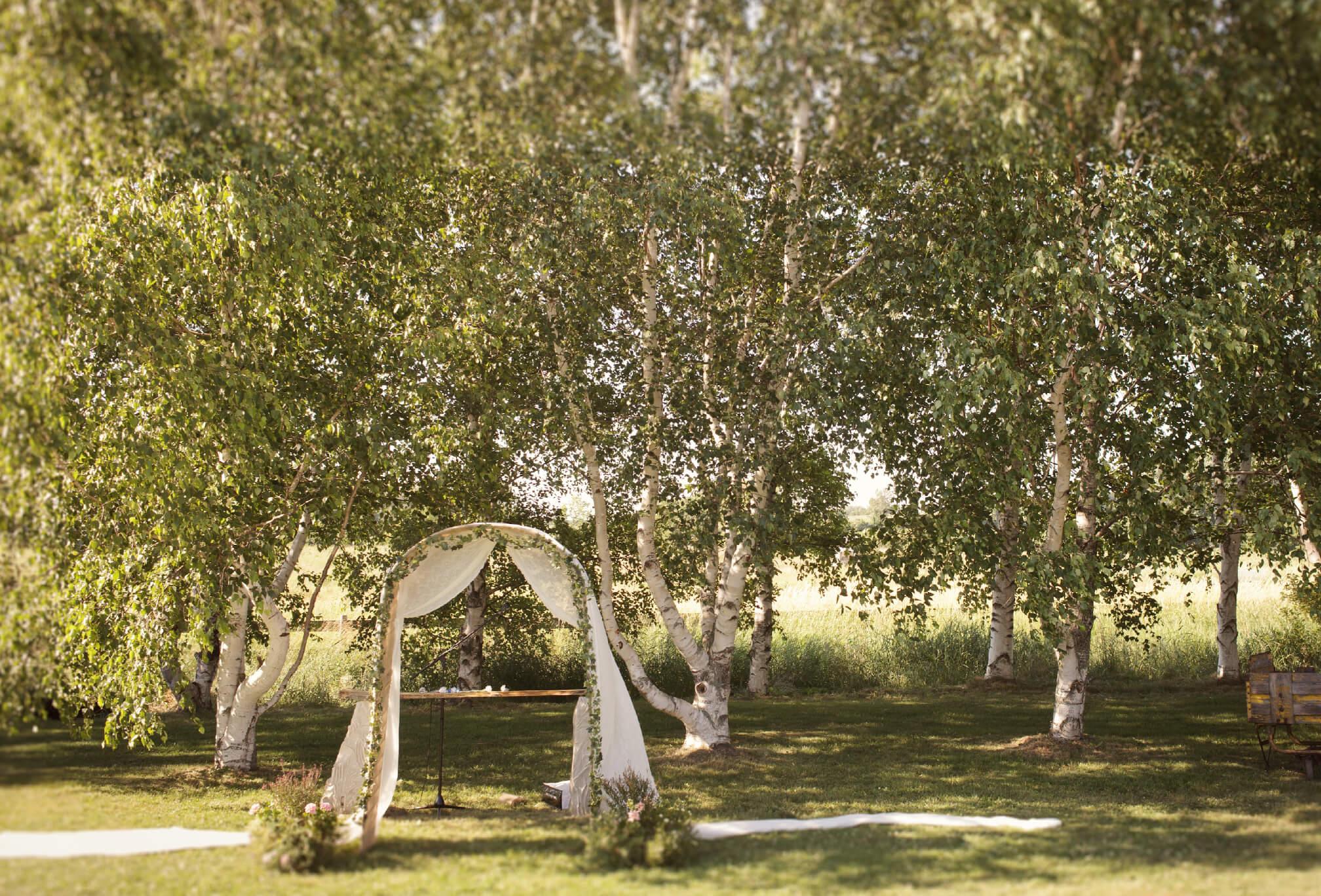 outdoor ceremony arbor in birch trees