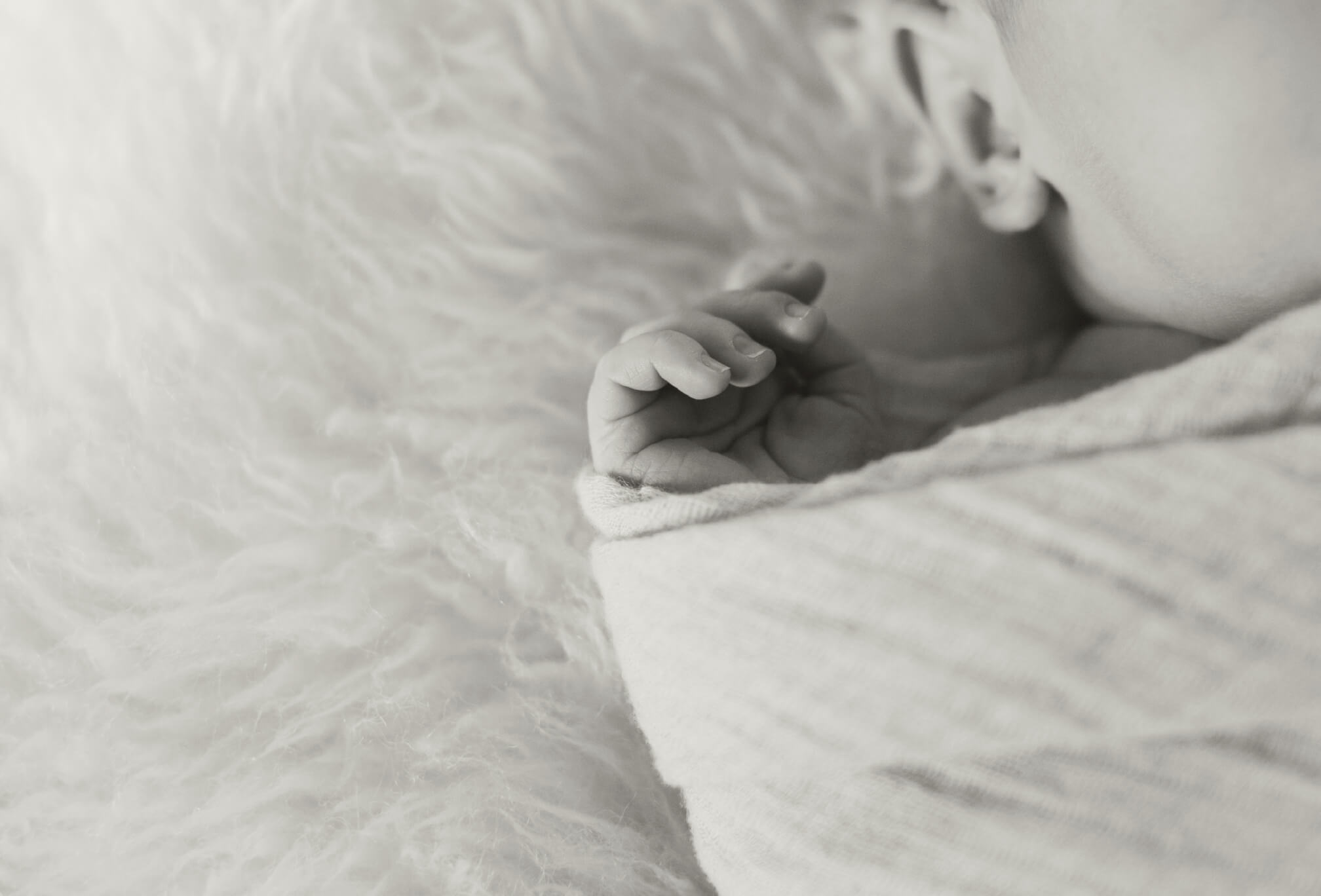newborn photography collingwood ontario