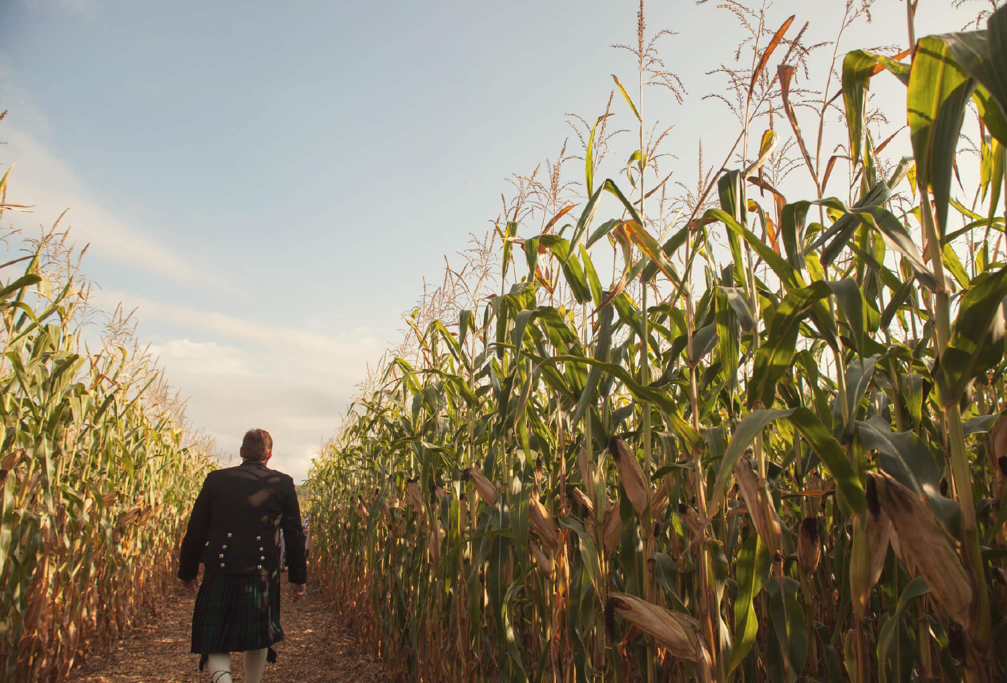groom walking through cornfield ceremony